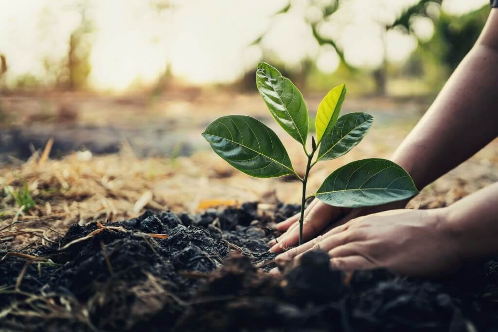 Controlling Air Pollution- Tree Planting-www.herbalvoice.lk